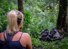 Gorilla Trekking- How to Enjoy to the Fullest